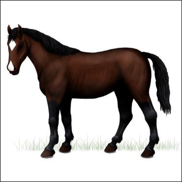 caballo-zaino-oscuro