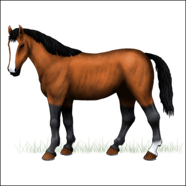 caballo-zaino-claro
