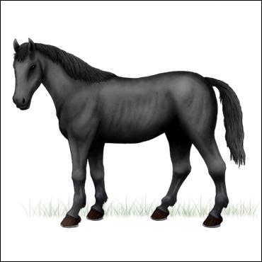 caballo-gris-oscuro