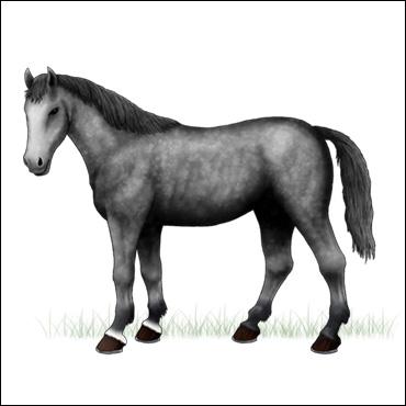 caballo-picazo