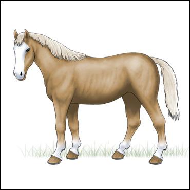 caballo-Palomino