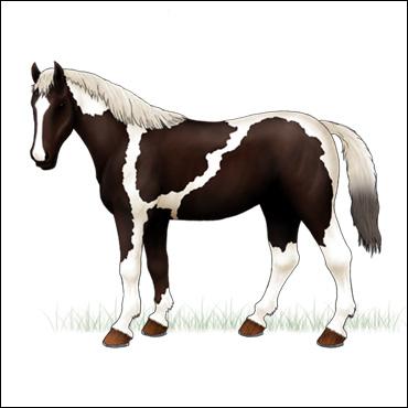 caballo-pinto