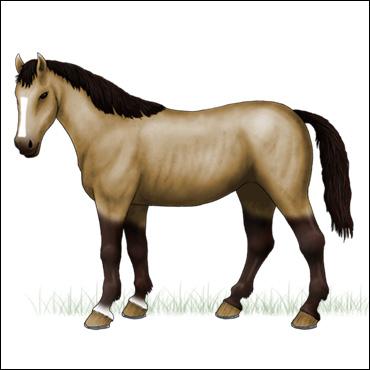 caballo-pardo