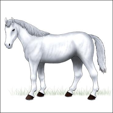 caballo-blanco-albino