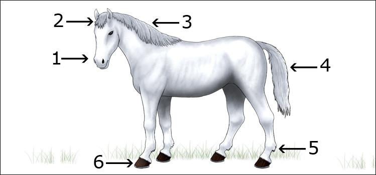 Guía de Pintura: pintar caballos de distintos colores (Parte I) | e ...