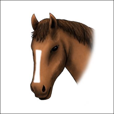 caballo-marca-cordon-corrido