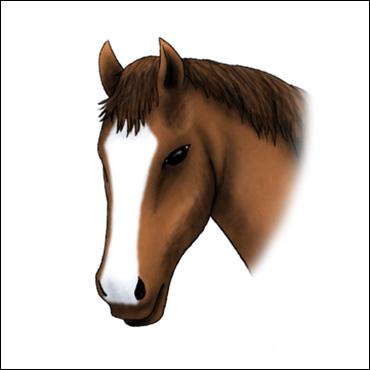 caballo-marca-lucero-prolongado