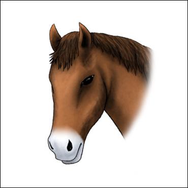 caballo-marca-mancha-entre-ollares