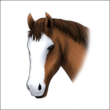 caballo-marca-cara-blanca
