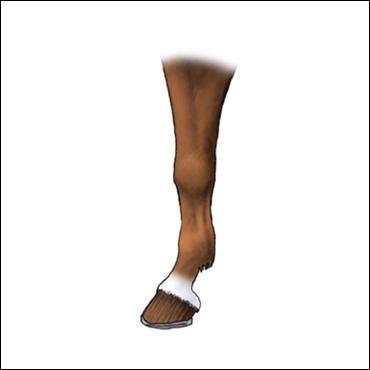 pata-caballo-cuartilla