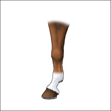 pata-caballo-calceta