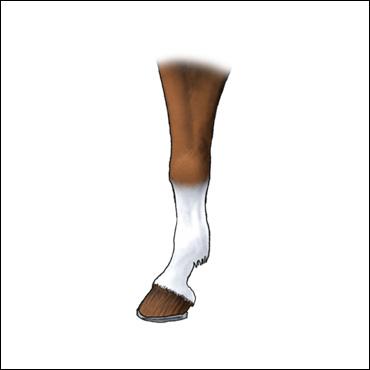 pata-caballo-calceta-alta