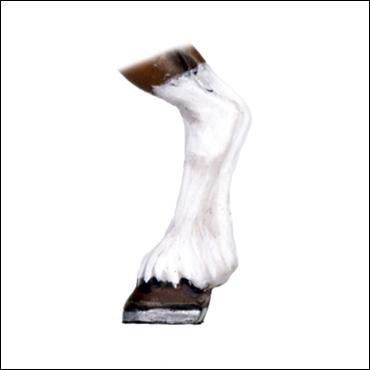 figura-pata-caballo-pata